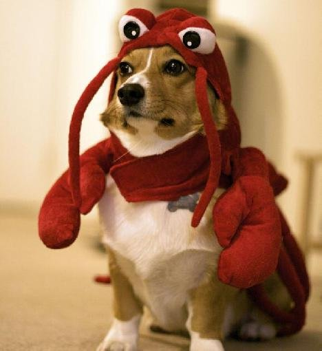 is it a dog or a lobster 20